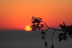IMG_6994 (sjj62) Tags: sunset seascape doorcounty sunsetting doorcountywi 40d ellisonbaywi ellisonbluffstatenaturalarea
