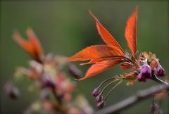 Orange Flower (Explore) (Edinburgh Photography) Tags: orange flower nature water leaves landscape outdoors nikon edinburgh leith d7000