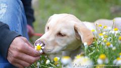 Ayna - La Suiza Manchega (Lidia Aparicio Sales) Tags: flowers dog naturaleza flores cute verde puppy nice image time pueblo bonito perro momento cachorro smell calma detalles imagen tenderness belleza ternura olor lidiaapariciosales