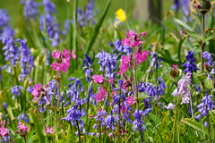 Floral mixture. (artanglerPD) Tags: pink flowers blue red purple colourful mixture