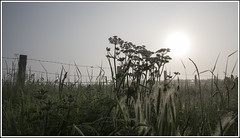 Misty May Morning (mistagain1 (Working away catch up soon)) Tags: uk morning flowers england mist grass digital fence spring weeds nikon may somerset gb d750 dslr 2016
