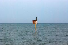 Gaviota (isabelvaldesa) Tags: santa relax mar colombia paz playa paisaje ave marta pajaro gaviota caribe sealizacion