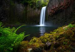 Abiqua Falls (steveschwindt) Tags: trees fern green nature water oregon forest river landscape waterfall rocks stream pacific northwest hiking or steve hike falls trail pnw basalt schwindt abiqua abiquafalls steveschwindt