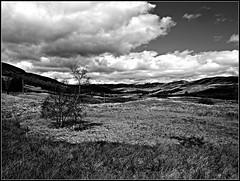 Clova Heath (ronramstew) Tags: blackandwhite bw scotland angus glen heath clova