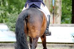 IMG_0517 (dreiwn) Tags: horse pony pferde pferd equestrian horseback reiten horseriding dressage hänger 2015 reitturnier dressur pferdekopf dressuur junioren ridingarena pferdesport doublebridle reitplatz reitverein pferdehänger kandare turnierreiten dressurprüfung ldressur
