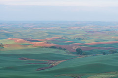 Farmland (Disorderly) Tags: statepark park rural washington butte farming overcast farmland hills land fields farms growing agriculture rollinghills palouse fertile steptoe steptoebutte steptoebuttestatepark oakesdale