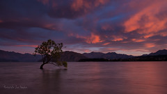 Wanaka Sunrise (RoosterMan64) Tags: newzealand panorama cloud sunrise canon panoramic wanaka lakewanaka 1740l 70d wanakatree