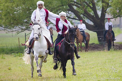 2015.05.23 - Les Cavaliers du Sud (NosChevaux.com) Tags: horses horse cheval belgique fantasia arabe cavalier feu tunisie chevaux paard paarden spectacle cavaliers spectaclequestre noschevaux noschevauxcom