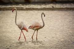 together forever (ssg99_99) Tags: birding wave wetland qnp baitalream