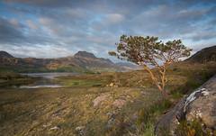 Loch Maree (Katherine Fotheringham) Tags: cliff tree scotland loch maree torridon
