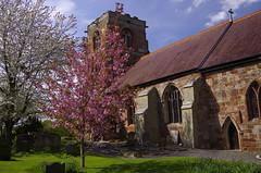 With Blossom (Sundornvic) Tags: trees tower church stone ancient shropshire belief atcham historis steata