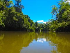 DSCN0713 (vhenryz) Tags: park trip trees sky cloud reflection nature water clouds forest river reserve calm national mangrove jungle brunei ulu temburong