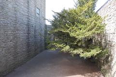 P9980585 (Patricia Cuni) Tags: castle scotland edinburgh escocia edimburgo castillo craigmillar