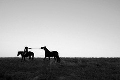 Tug (lucycawood) Tags: horses bw silhouette landscape
