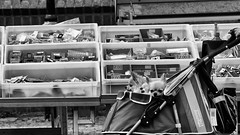 Great Ironware (Alfred Grupstra Photography) Tags: street blackandwhite bw dogs nederland streetphotography streetlife nl noordholland schagen
