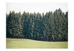 (harald wawrzyniak) Tags: green mamiya film analog forest austria woods kodak scan analogue harald portra styria 645af wawrzyniak