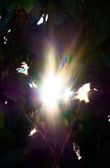 diffraction de la lumire ( travers un arbuste) (zabou256 aussi sur Ipernity) Tags: color colors couleurs couleur farben arcenciel diffractiondelalumire
