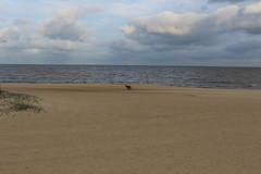 IMG_0982 (fernanda.pallante) Tags: praia faro uruguay teatro playa montevideo farol puntadeleste puntaballena sols losdedos uruguaynatural
