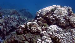 img_3779oa (www.linvoyage.com) Tags: sea thailand island sailing yacht corals racha        deadcorals