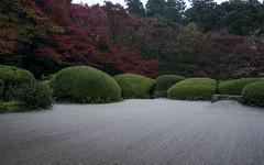 Shisen-do in November 11 (PV9007 Photography) Tags: autumn fall japan temple leaf maple kyoto herbst momiji   kouyou      herbstlaub  sakyoku 2015  ahorn ichijoji shisendo   shisendou sakyo ichijouji
