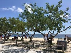 John Pennekamp Beach (MyFWCmedia) Tags: beach fwc myfwc myfwccom wildlife florida floridafishandwildlife conservation johnpennekamp keylargo flkeys floridakeys floridastateparks johnpennekampcoralreefstatepark park pennekamp lovefl
