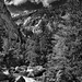 Tonal Contrasts (Black & White, Yosemite National Park)