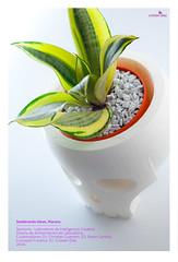 Sembrando Ideas, Maceta. (LaMaquinadeFotos) Tags: calaca maceta creativo planta 3d producto