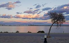 rbol sin sombra (Fotgrafo-robby25) Tags: atardecerenelmarmenor fujifilmxt1 lopagnmurcia marmenor nubes salinasyarenalesdesanpedrodelpinatar