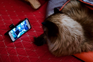 Subscriber says HIS CAT LIKES WATCHING ME on UTube