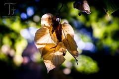 Color Play (Thomas TRENZ) Tags: austria autumn farben herbst leafs nikon tamron thomastrenz vienna bltter colors d600 fullframe fx iamnikon licht light macro makro vollformat wien sterreich