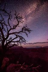 Grand Canyon Toroweep Milky Way Rising over the Grand Canyon!  Nikon D810 Dr. Elliot McGucken Fine Art Landscape & Nature Photography for Los Angeles Gallery Show! (45SURF Hero's Odyssey Mythology Landscapes & Godde) Tags: nikond810 drelliotmcgucken fineartlandscape naturenikonafsnikkor1424mmf28gedlens photography forlosangelesgalleryshow nikonafs nikkor1424mm f28g edlens d810 nikkor nikon nikoncamera lens wideangle grandcanyon toroweep toroweap tuweep tuweap milkyway milky way
