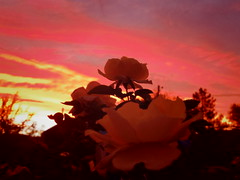 amazing sun set light, Sept. 6 (EllenJo) Tags: pentaxqs1 september 2016 ellenjoroberts ellenjo clarkdale arizona az sunset light september5 brilliant evening sky