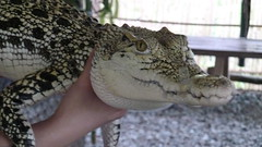 Hello croc (sofimi) Tags: travel puertoprincesa palawan crocodilefarm palawanwildliferescueandconservationcenter