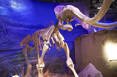 Mammoth (juan_guthrie) Tags: drumheller alberta royaltyrrellmuseum dynosaur
