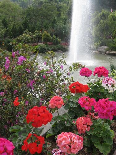 Chiang Mai Flower Garden