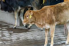 DSC_4709.jpg (mrburner73) Tags: zoo nuremberg tiergarten nuernberg tamron150600 tamronsp150600mmf563divcusd nikond750
