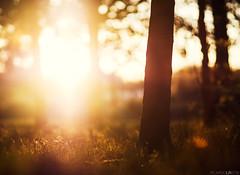 (Photographordie) Tags: light luz atardecer bokeh 14 85mm olympus vivitar samyang rokinon samyang85mm epm2 olympuspenepm2 samyangasphericalif85mmf14