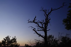Stark (Sundornvic) Tags: trees light sunset sky sun silhouette woods shine shropshire hill haughmond