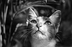 Look UP! (ashik mahmud 1847) Tags: cat nikkor bangladesh d5100