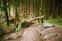 Staircase (strzez wartosci) Tags: film analog forest scotland highlands minolta hiking rangefinder trail westhighlandway minoltahimatic