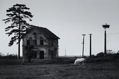 Underworld (Marjarah) Tags: blackandwhite horse field landscape afternoon surreal romania