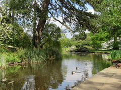 Lake (oldfirehazard) Tags: cambridge england lake nature beauty garden spring university may ducks botanicgarden 2016 cambridgeuniversitybotanicgarden