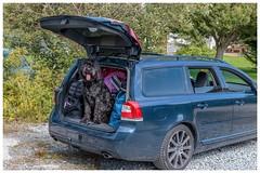 P vg / on our way (bengtson.jonas) Tags: dog car canon volvo hund bil vg fotosondag fotosndag fs160515
