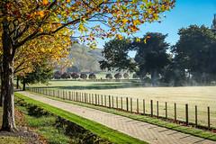 Morning Mist (Laz Harris) Tags: newzealand nz hawkesbay tukituki