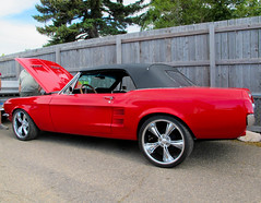 1967 Ford Mustang Convertible (coconv) Tags: pictures auto street old red classic cars ford car vintage photo automobile image photos antique picture convertible images vehicles photographs photograph 1967 vehicle rod autos mustang collectible custom collectors 67 automobiles blart