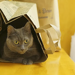 cat is not yet out of the bag thumbnail
