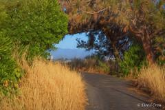 Canopy (Shooting with Jersey Joe) (buffdawgus) Tags: california northerncalifornia landscape menlopark sanmateocounty canonef24105mmf4lisusm canon5dmarkiii lightroom5 topazsw baylandstrail