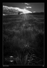 Sun Grass (jeremy willcocks) Tags: blackandwhite tree grass mono shadows devon sunstar southhams jeremywillcocks fujix100t wwwsouthwestscenesmeuk