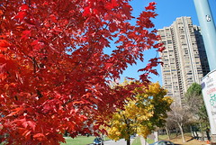 fall_255 (Sascha G Photography) Tags: autumn trees toronto color tree fall leaves leaf nikon seasons waterfront lakeshore indiansummer d60