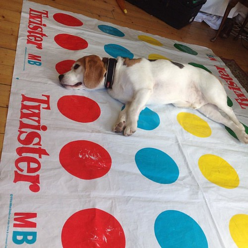 #Oscar the #dog plays #twister #dogsofinstagram #murraykerrphotography